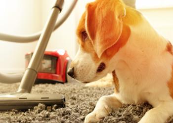 Best Vacuum Under $250